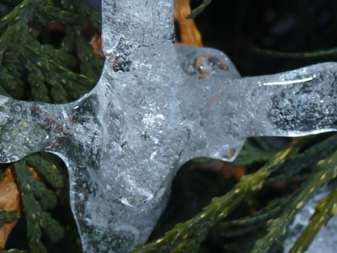 Ice on a branch. A very cold branch. A very cold branch who also quits.