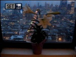 lilies-lora-mitchell