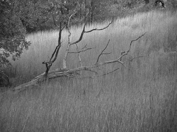 Branch at WNC BW