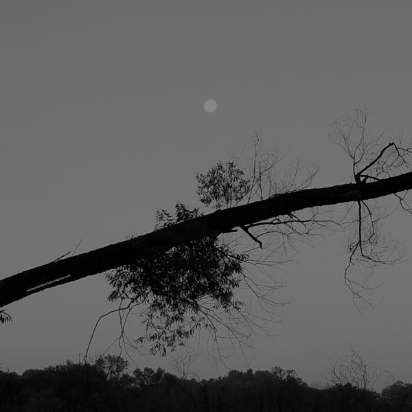 08-05-20 moon